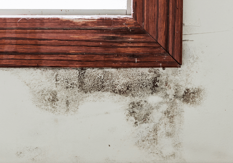 Viking Analytics and iioote introduce new AI-based product for early detection of black mold